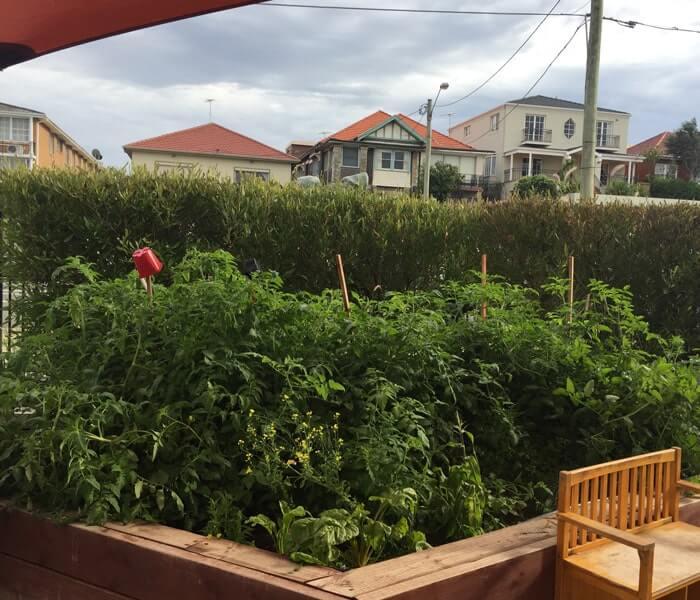 Guardian Maroubra veggie patch