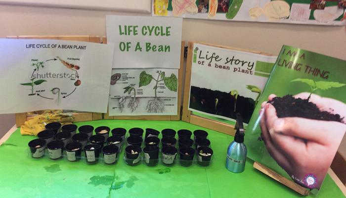 Life cycle of a bean display