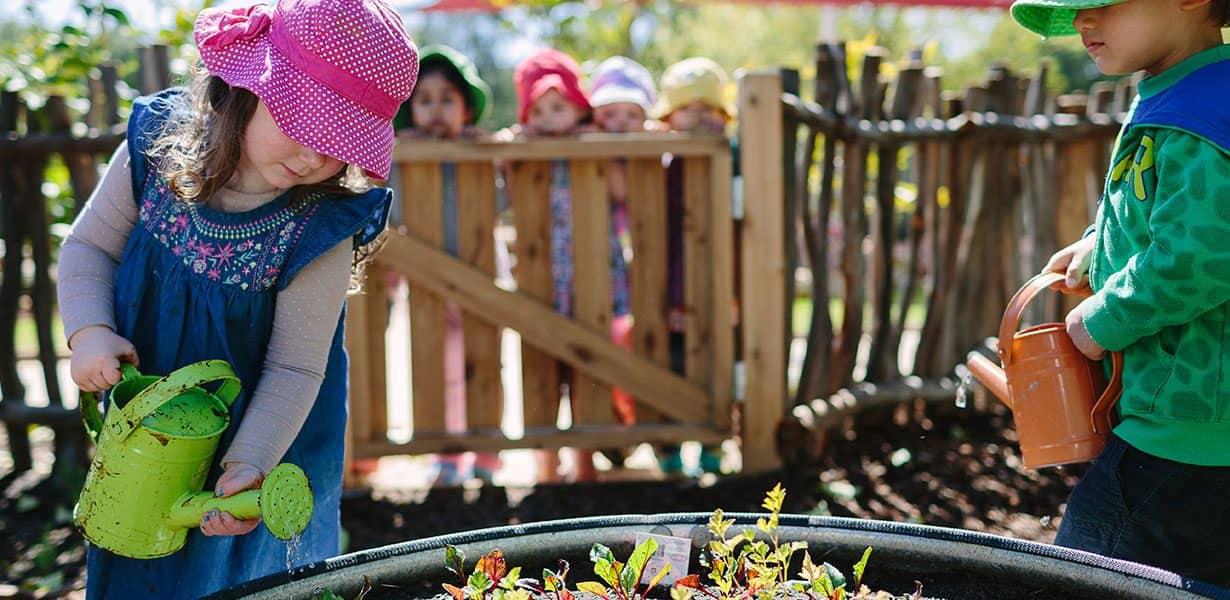 Paradise community garden