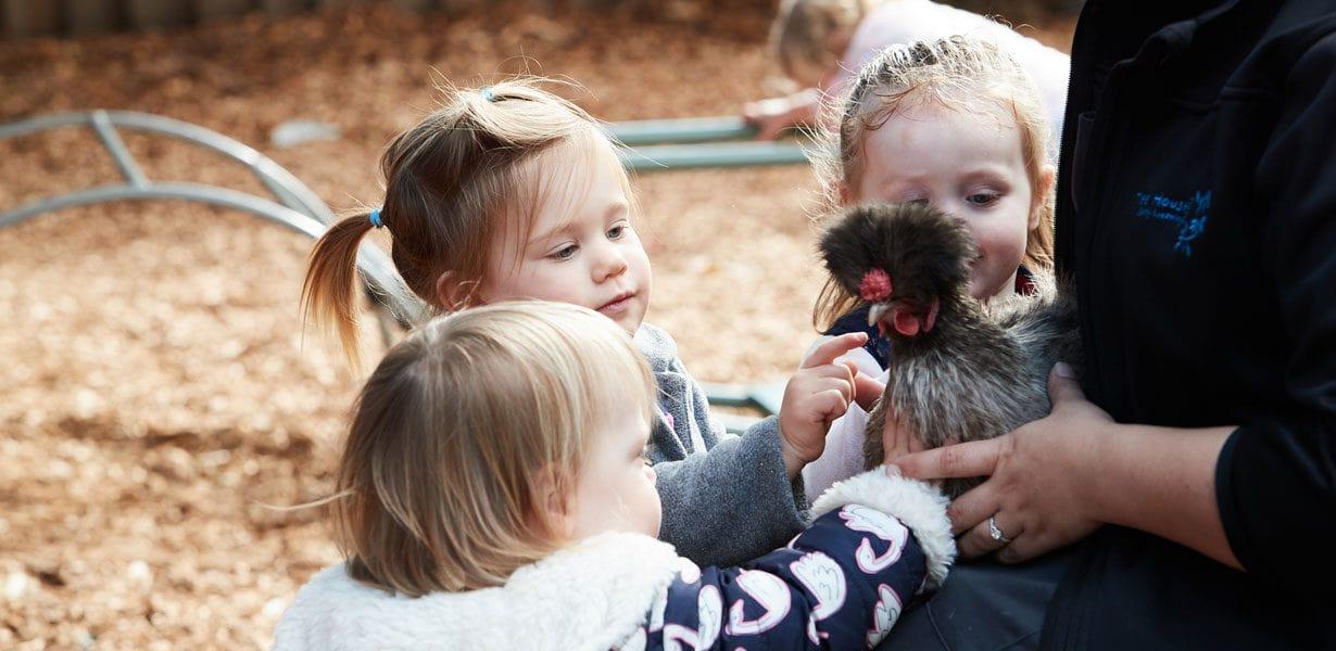 three children touching a chicken