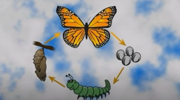 Join us as we Visit a Butterfly House! Guardian Learning Exchange