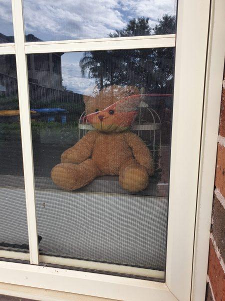 bear in window for neighbourhood bear hunt